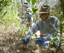 Volunteers help regenerate bushland across the state by helping with weeding and planting