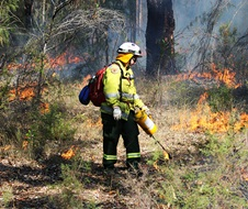 Drip line, staff from Metro South West and Blue Mountains regions undertaking the Pisgah Ridge hazard reduction burn near Glenbrook in the Blue Mountains National Park