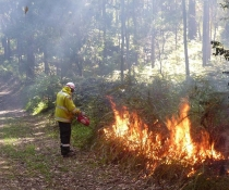 HR Lighting up Bongil Bongil National Park