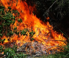 Controlled Burn by National Parks and Wildlife Service and NSW Rural Fire Service, fire and Rescue NSW.