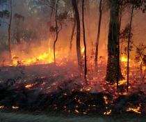 Fire flames and sparks woodland blackened tree trunks Brindabella hazard reduction burn