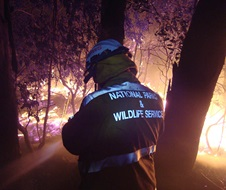 Hazard reduction at night Georges River National Park field officer Enhanced Bushfire Management Program EBMP