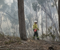 Hazard reduction burn in Abercrombie River National Park