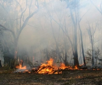Flames at Gillans Creek Hazard reduction burn.