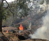 National Parks staff perform hazard reduction burn at Lane Cove National Park