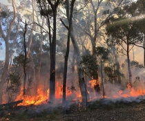 Mount Kaputar National Park hazard reduction burning
