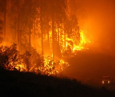 Large active fire high flames in forest at night NPWS vehicle patrol