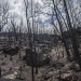 Ash burnt area of high intensity fire killed the tree canopy Warrumbungle National Park