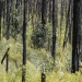 Regrowth after fire discovery tour at Warrumbungle National Park