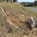 Recording soil data in the field by a roadside embankment