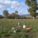 Monitoring land in the Murrumbidgee Catchment Management Authority