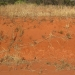 Batter showing a typical Red Kandosol (Calcareous Red Earth) in the Cargelligo region of western NSW