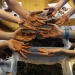 Soil Knowledge Network: dirty hands at student workshop at the Australian Museum