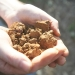 Soil, a unique and vital resource in sustaining terrestrial life.