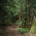 Barrington Tops walking trail, Barrington Tops National Park