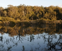Tuross Lake reflecting mangroves, Batemans Marine Park