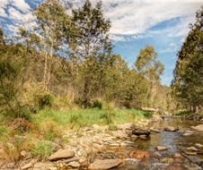 Brindabella National Park near Canberra is an important habitat for the critically endangered Northern Corroboree Frog (Pseudophryne pengilleyei).