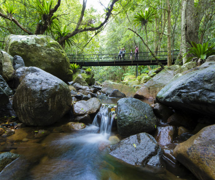 Minnamurra Rainforest, Budderoo National Park