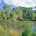 Sustainable practices in business and the community help protect and conserve the natural environment like Castlereagh Swamp Woodland in Western Sydney