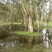 Wetland, Centennial Park Sydney, benefited from an Restoration and Rehabilitation Grant – Heritage Stream - in 2014