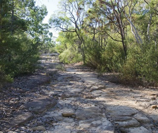 The rocky road and gum tree lined Old Great North Road in Dharug National Park