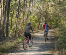Garigal National Park is a popular mountain biking spot for Sydneysiders