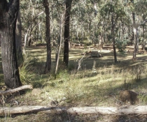 Greenbah campground in Goobang National Park