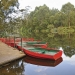 Brightly coloured row boats tied to jetty on the river at Lane Cove National Park