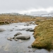 Alpine bog and snow melt, Kosciuszko Summit, Kosciuszko National Park