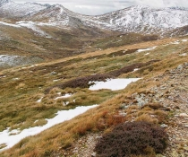 Alpine vegetation, Kosciuszko Summit, Kosciuszko National Park