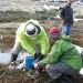 Salt monitoring in bog and fen vegetation, Kosciuszko National Park