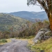 Colourful snow gums (Eucalyptus pauciflora) line the road on the Perisher to Blue Cow walk, Kosciuszko National Park