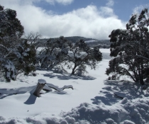 Snowfields at Mount Selwyn, Kosciuszko National Park, Snowy Mountains