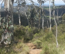 Mount Towac walk, Mt Canobolas State Conservation Area
