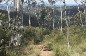 Mount Towac walk, Mt Canobolas State Conservation Area