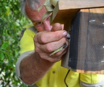Roger Dunn, NPWS, carefully placing the glider in their brand new next box