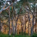 Paperbark Forest, Myall Lakes National Park