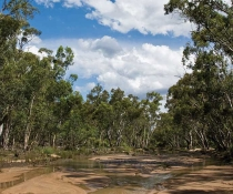 Outback landscape in Pilliga National Park. Photo credit: Rob Cleary.