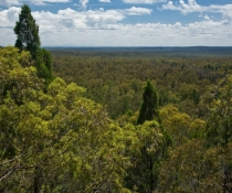 Pilliaga Sate Conservation Area in north-west NSW is one of the parks involved in reintroducing locally extinct mammals