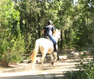 Horseriding is a popular activity allowed in some national parks