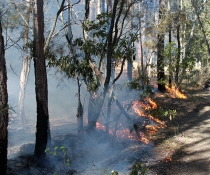 Cultural burn at Triplarina Nature Reserve, West Nowra.