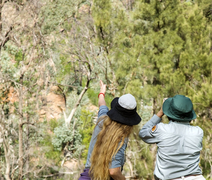 People watching birds at Warrumbungle National Park, Burbie Canyon track