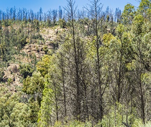 Regrowth after fire discovery tour at Warrumbungle National Park. The park is the focus of a major research and recovery program by National Parks