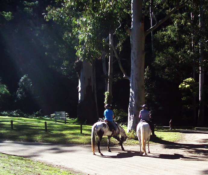 Blue Mountains Trail Horse Riding Club, Wheeny Creek, Wollemi National Park