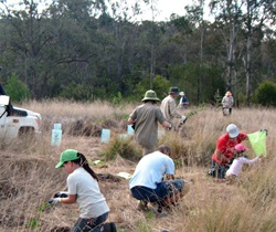 Volunteers helping bush regeneration, Yellomundee Regional Park