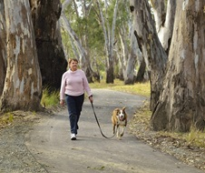 Dog being walked on leash at Willoughbys Beach campground, Murray Valley Regional Park which is a dog-friendly park