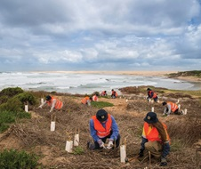NPWS Volunteers replanting in coastal dunes.