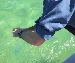 Taking beach water quality samples from the water