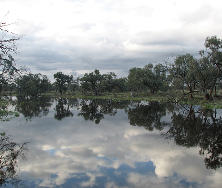 Bottle Bend Reserve during environmental watering