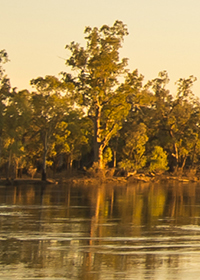 Trees along bank of Murray River